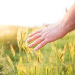 séchage des grains